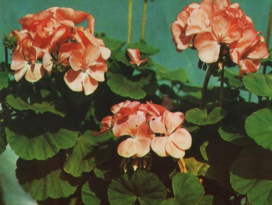 Красным цветками и зелеными листьями